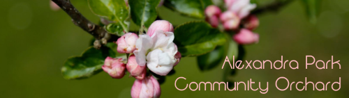 Alexandra Park Community Orchard