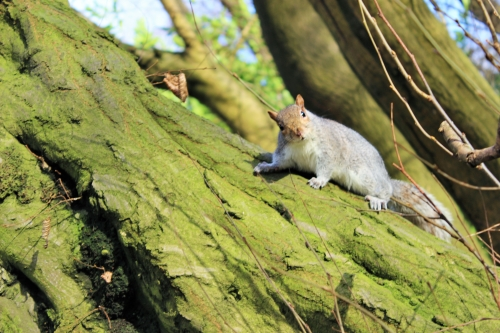 Wild Glasgow Photography Competition Winner Holly Cuthbertson - 'Squirrel'