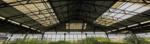 Internal View of Cattle Market Sheds